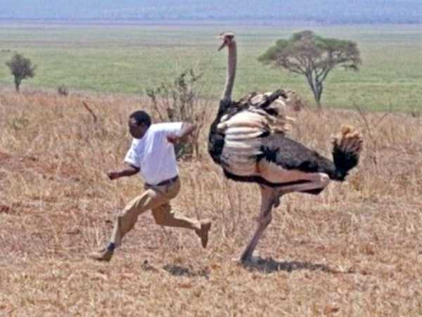 Various Funny Photos in Africa